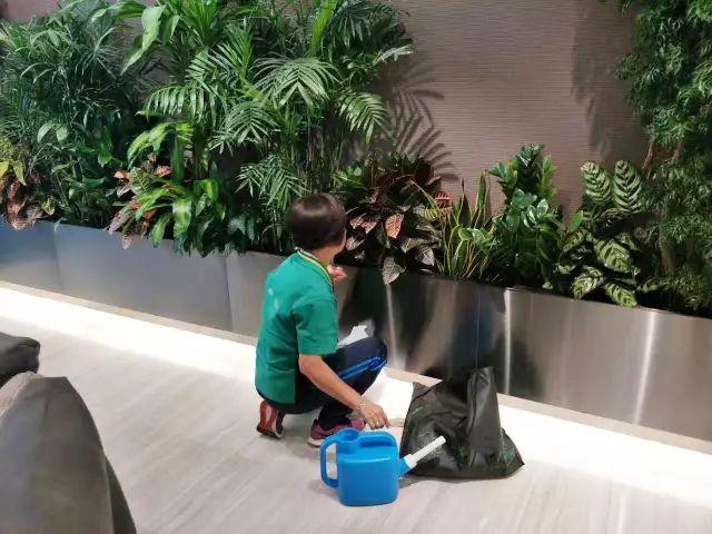 盆栽植物养护师
