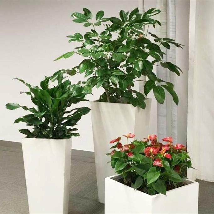 玻钢盆组合植物租赁
