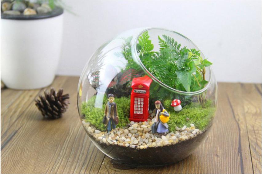 成都植物租赁过程中用于室内装饰的植物主要以