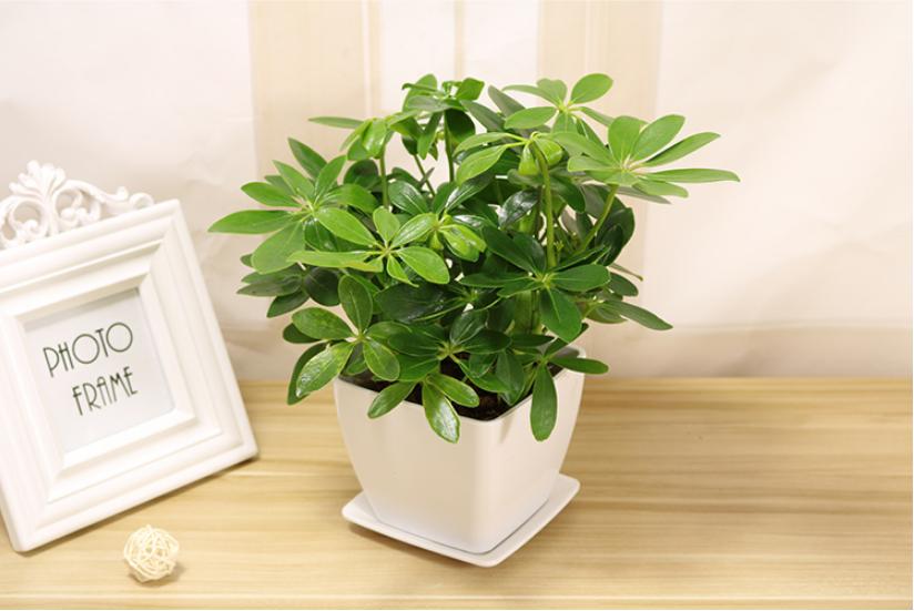 专业的成都植物租赁公司租赁植物能够净化新房