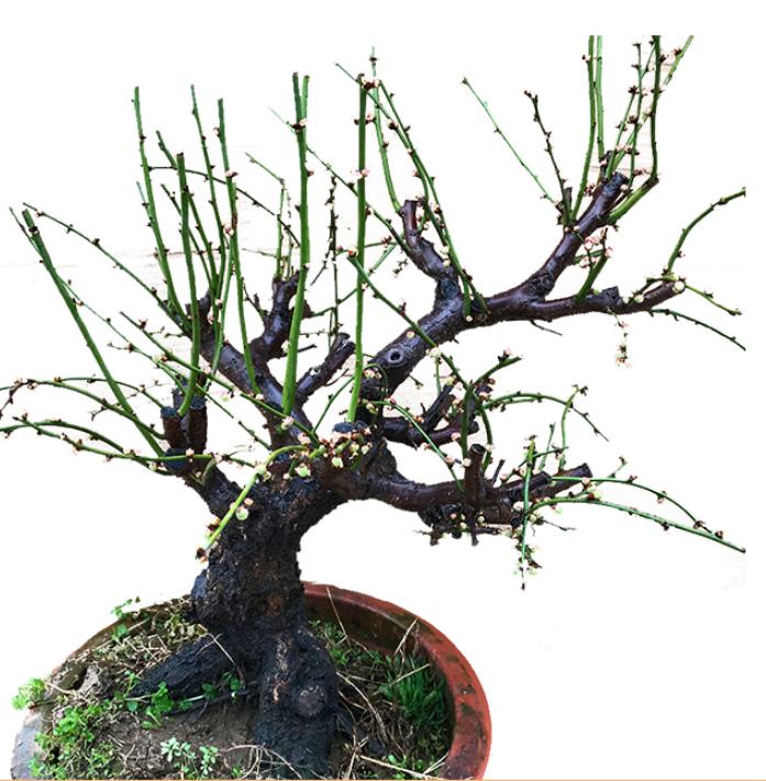 一般植物租赁过程中都有盆景植物和盆栽植物这
