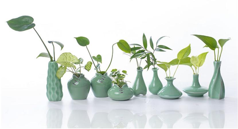 植物租赁公司秋季生长最旺盛的植物是铁线莲
