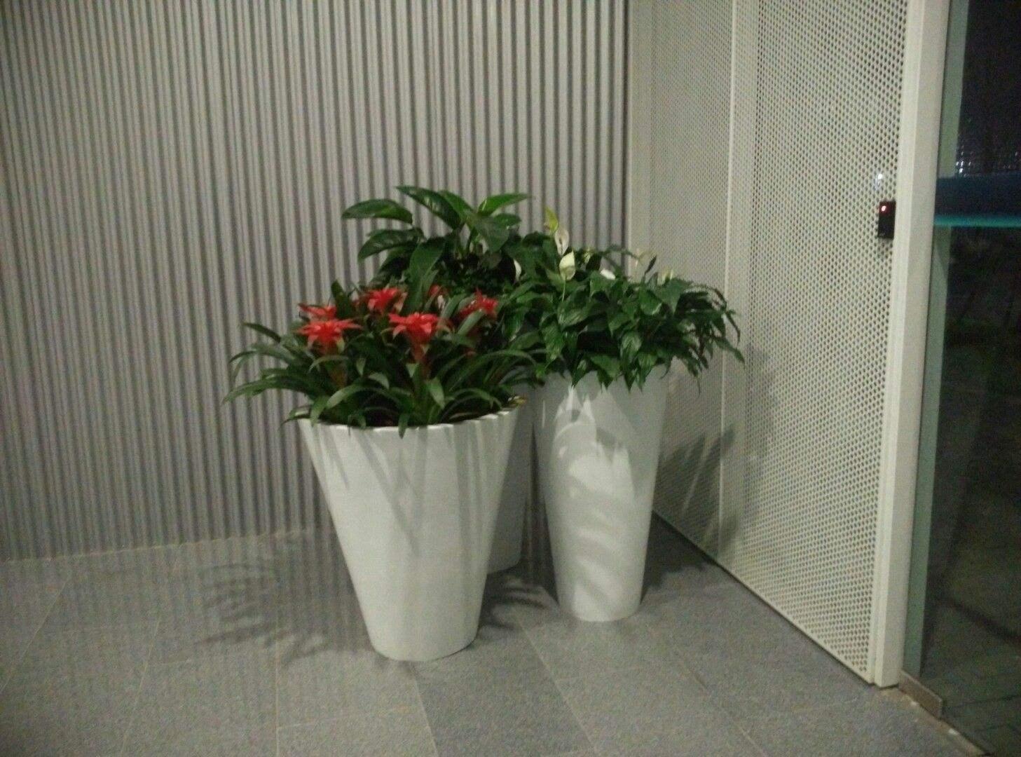 花卉产业调查:租摆不买花 鲜花租摆渐成时尚