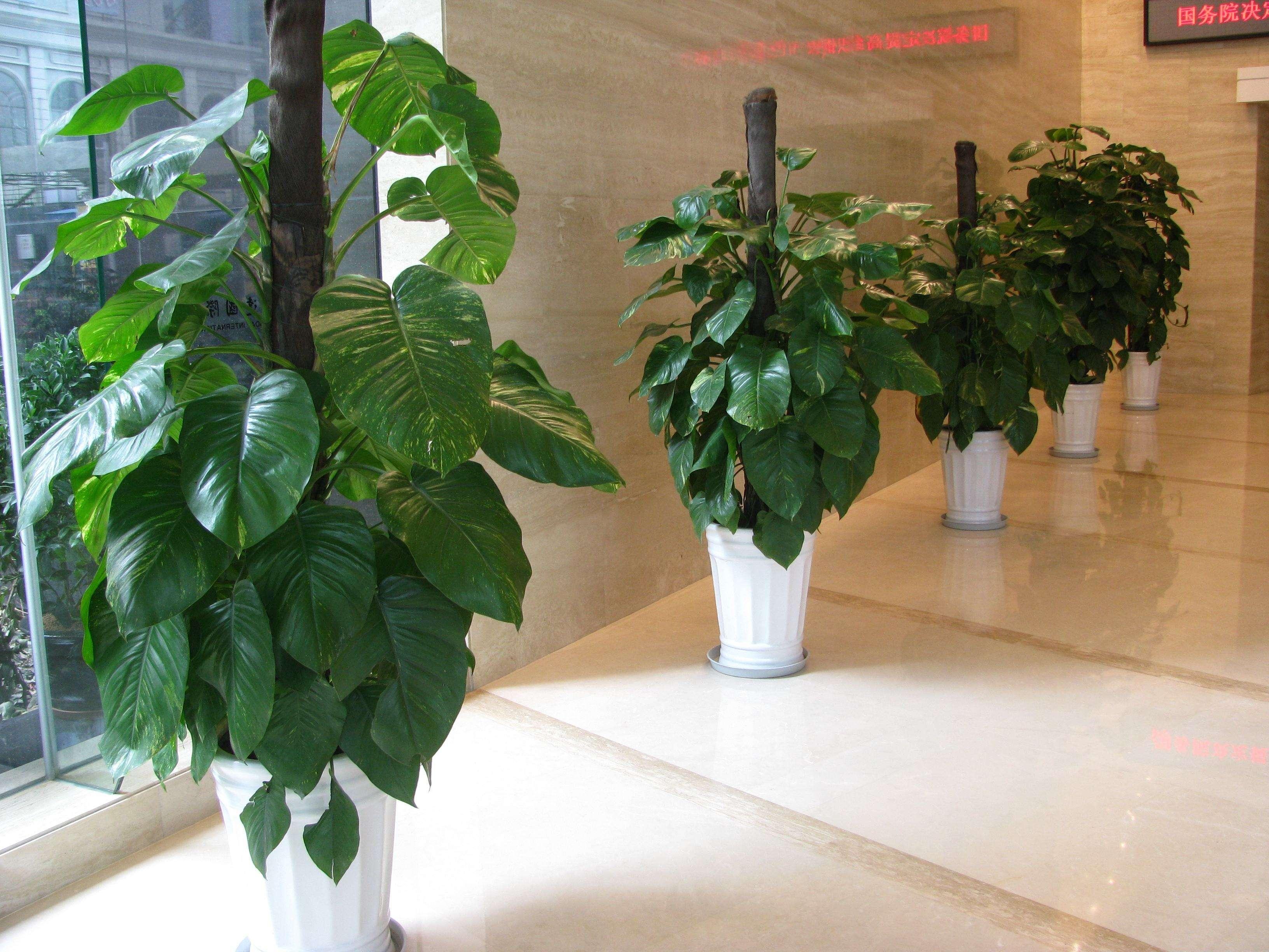 在选择植物租摆时需要注意些什么呢