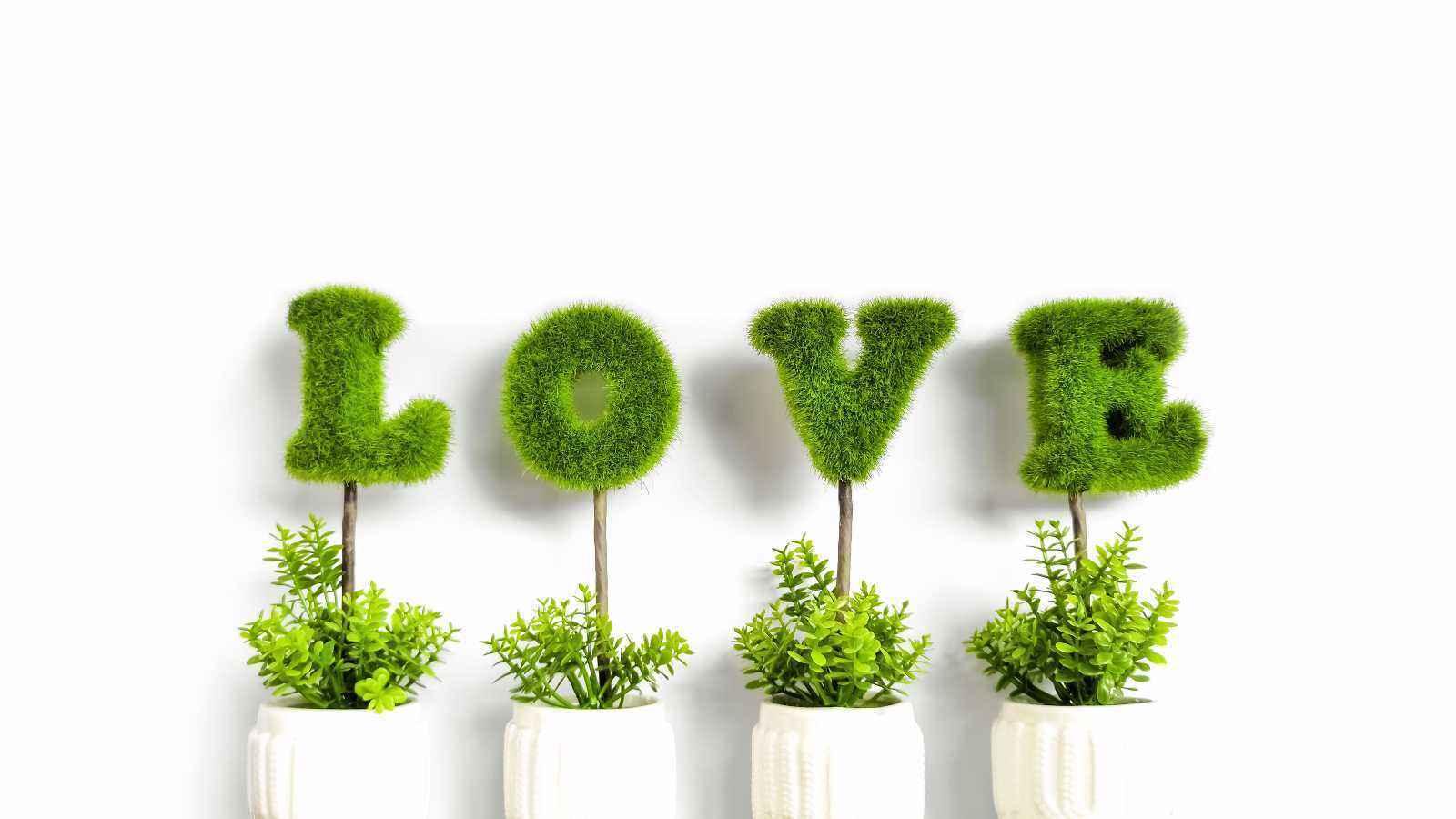 错误的养护植物方法