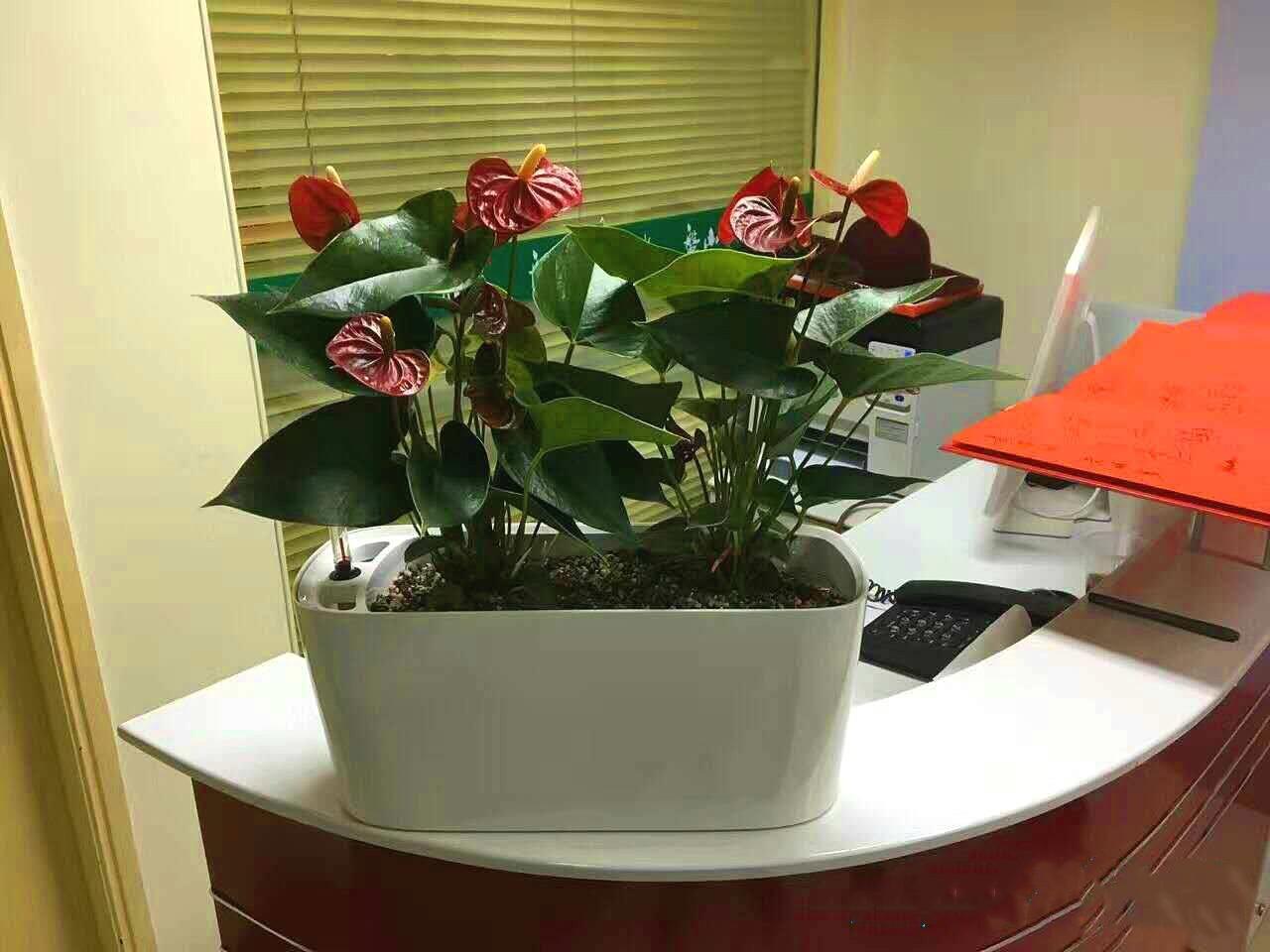 成都植物出租:植物租赁的注意事项