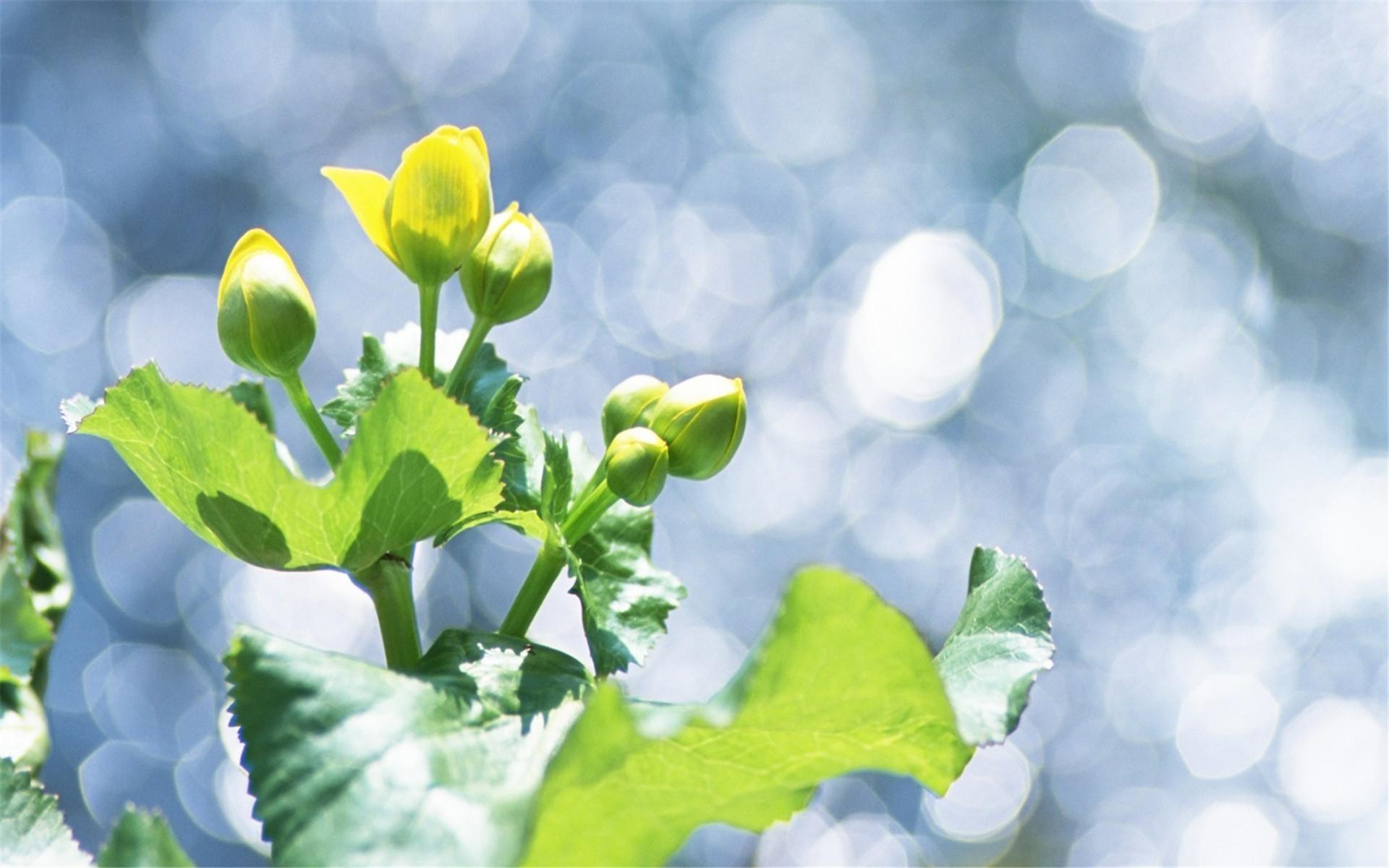 大成园林绿植租摆服务,打造绿色健康佳生活