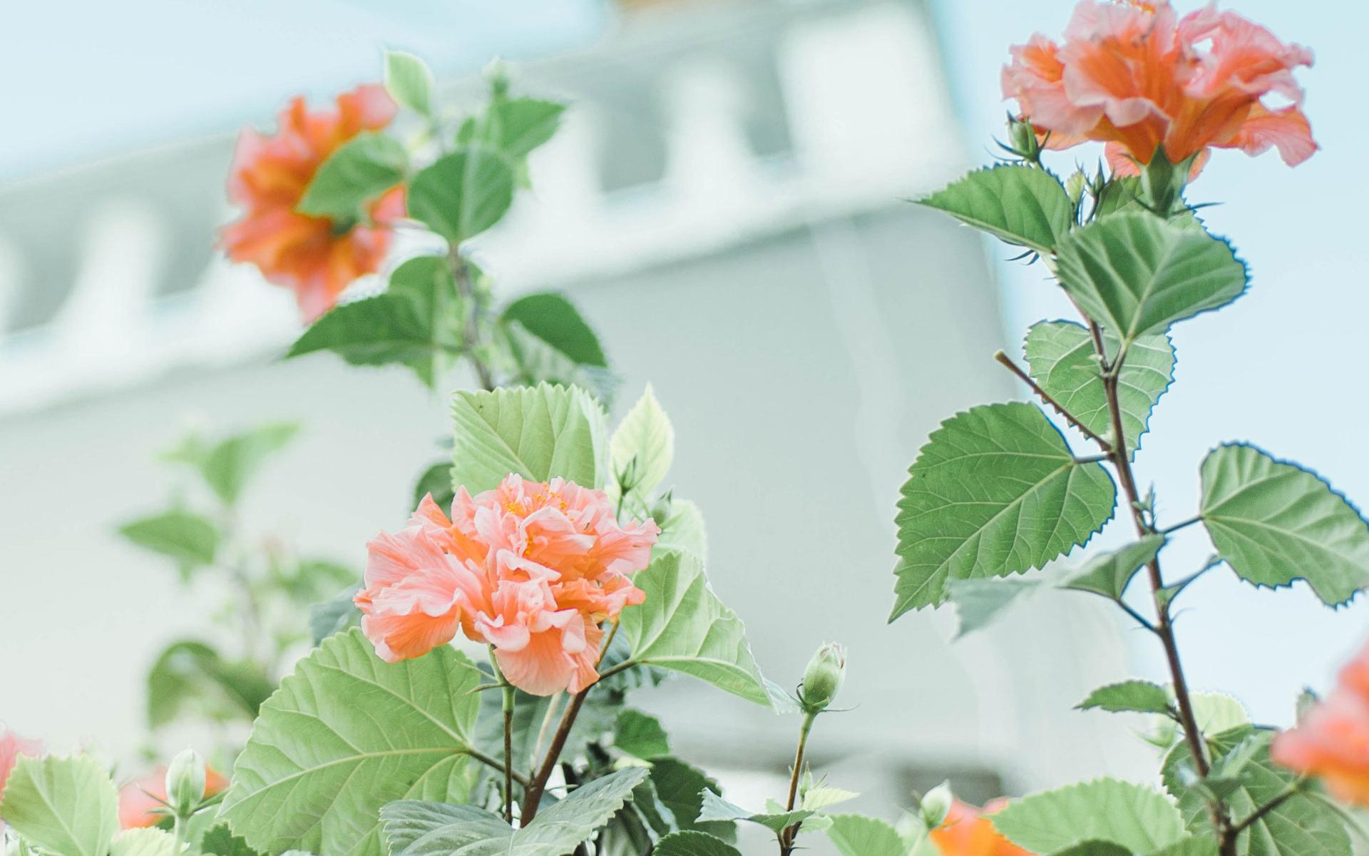 成都双流区植物租赁:绿植的美丽以及好处
