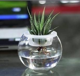 成都花卉盆栽租赁简介如何在水培植物下养鱼