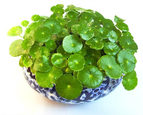 室内盆栽植物有哪些作用?