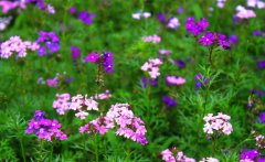 成都园林养护工程之花卉过冬记