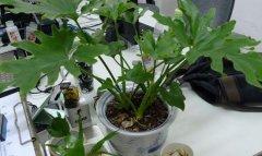 植物租摆让老板在办公室多放点植物吧