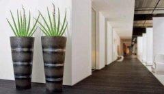 揭秘现在的人为什么会选择租植物