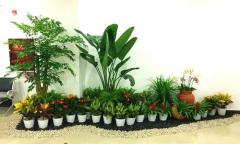 绿植租摆的各种栽培介质介绍以及选择公司的技