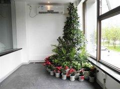 关于植物对空气净化能力的排行榜介绍